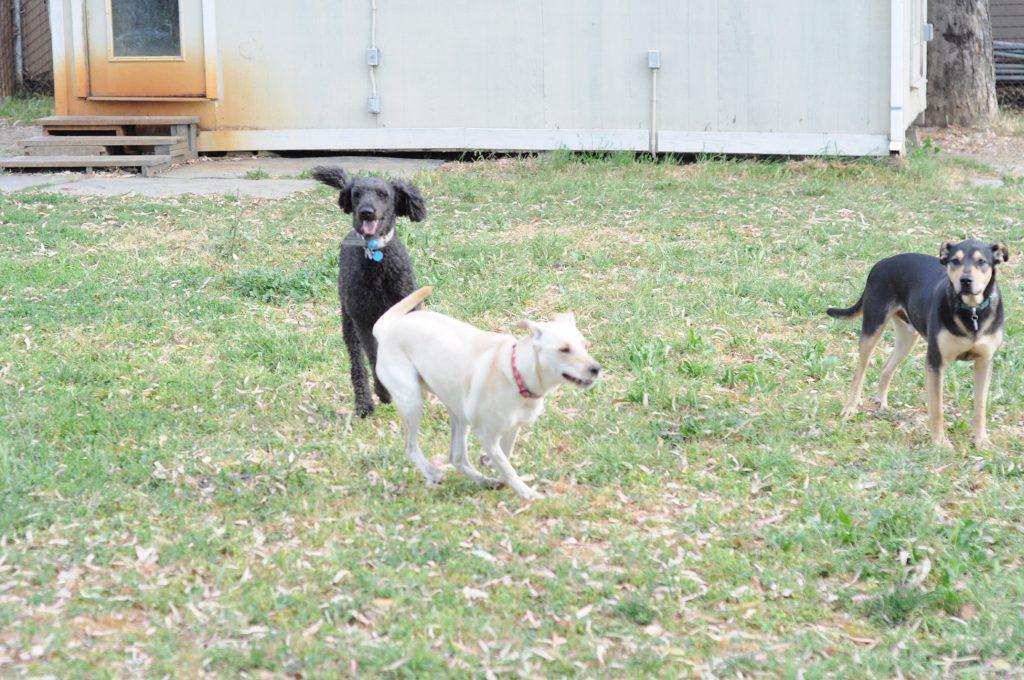 River Dogs Resort